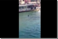 В Венеции под смех и крики толпы утонул африканский беженец