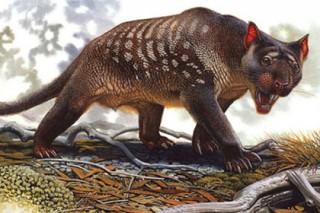Найдена причина вымирания древних гигантских животных