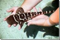 Лишенная самца акула Леони перешла к «непорочному зачатию»