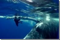 Спасение женщины от акулы китом попало на видео