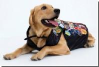 Собаки отберут работу у моделей