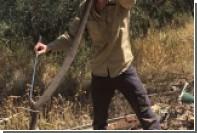 Змея заставила австралийскую семью поверить в призраков в унитазе