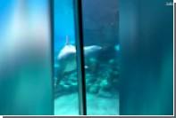 Дельфины сбились в кучу в попытке разглядеть протез американки