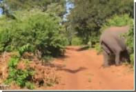 Слон протаранил машину туристов и лишился бивня