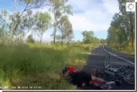 Кенгуру на лету сбил велосипедистку и ускакал