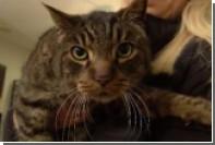 Американка встретила похороненного 10 лет назад кота
