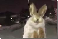 Заледеневших из-за аномальных морозов казахских зверей сняли на видео