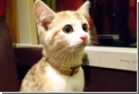 Котенок Фундук сел в поезд и доехал до хозяйки