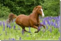 Американец повадился на свидания к лошади соседа
