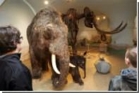 Якутия возьмется за экспорт бивней мамонта в Китай