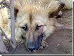 В Одессе установят памятник бродячей собаке