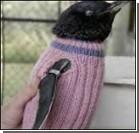 Вязаные свитера спасут пингвинов от гибели