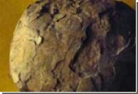 Зародышей динозавра хотели пустить с молотка