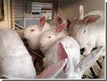 Бурятские буддисты спасли обреченных на убой кроликов