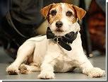 В Голливуде вручили собачью кинопремию
