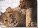 В казанском зоопарке выберут лучшую влюбленную пару зверей