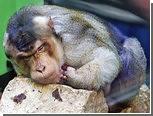 Обезьяны научились мыть пол в удмуртском зоопарке