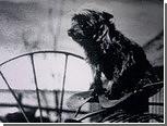 """Терьера из """"Волшебника страны Оз"""" предложили сделать официальным псом Канзаса"""