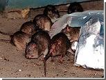 Выбрана самая страшная крыса нью-йоркского метро