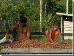 Экспортеры бойкотировали первый аукцион крупнейшего в мире производителя какао