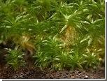 Первые растения вызвали своим появлением серию ледниковых периодов
