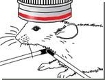 Ученые заглянули внутрь работающего мозга мыши