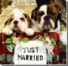 Ах, эта свадьба: традиции, обряды, поверья
