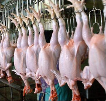 Украине разрешили поставлять курятину в Евросоюз