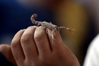 Рейс из Лос-Анджелеса задержали из-за скорпиона