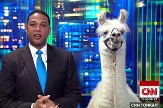 Журналист CNN взял интервью у ламы в прямом эфире