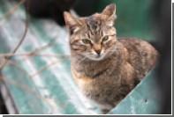 Воронежская кошка проехала 500 километров под капотом автомобиля