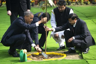 Священная фига Обамы в Индии оказалась живой