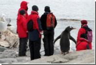 В Антарктику позвали работать устойчивых к вонючим пингвинам людей