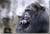 Отличие человека от обезьяны определено на генетическом уровне