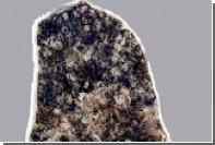 Палеобиологи нашли древние бактерии возрастом 2,3 миллиарда лет
