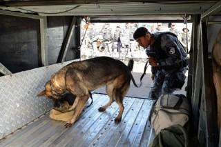 В Бразилии полицейская собака укусила футболиста во время матча