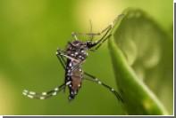 МАГАТЭ предложило стерилизовать комаров радиацией для борьбы с вирусом Зика