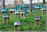 Украина начала экспортировать пчел в Канаду