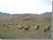 Киргизия запретила узбекам бесплатно пасти скот на своей территории