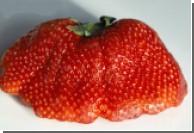 Украинцев кормят геномодифицированными продуктами