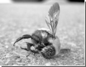 Пчелиный кризис