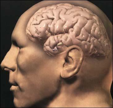 Мозг мальчиков и девочек работает по-разному