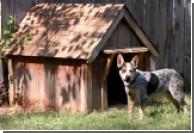 Угонщик прятался от полиции в собачьей будке
