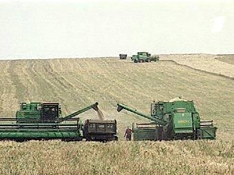 Россия продлила действие экспортных пошлин на пшеницу