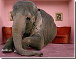 Киевский зоопарк купит двух слонов в Шри-Ланке за 2 миллиона гривен