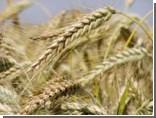 Россия снимет запрет на экспорт зерна не ранее 2011 года