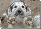 Молодцы. Киевляне помогли найти семью 21 животному