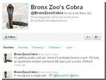 У сбежавшей нью-йоркской змеи появился твиттер