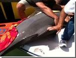 Выпрыгнувший из воды дельфин упал в лодку