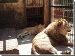 Обитателям румынского зоопарка запретили спариваться